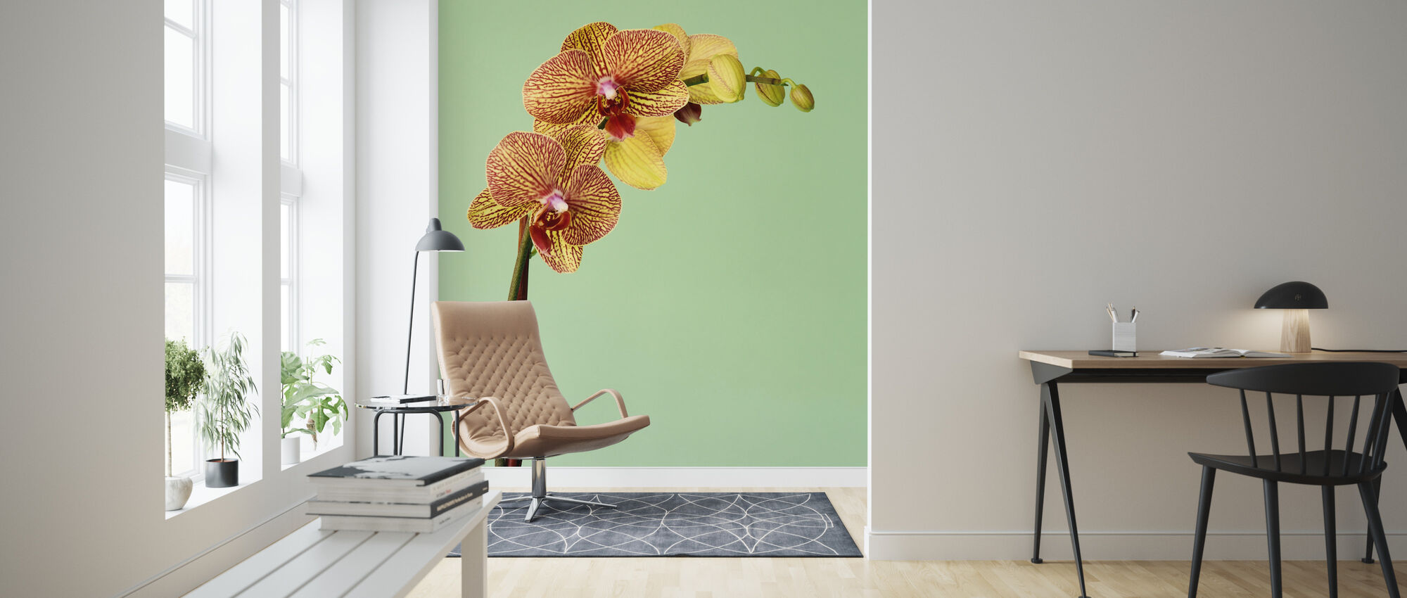 Yellow Phalaenopsis Orchid - Wallpaper - Living Room