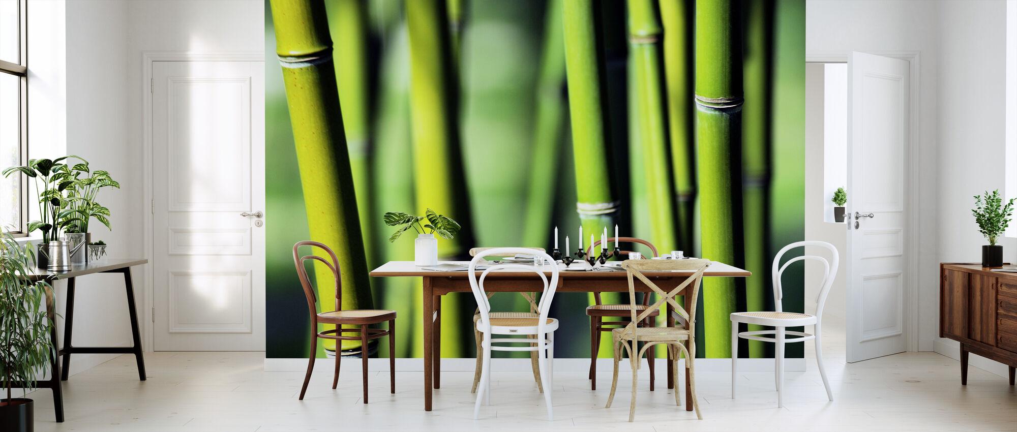 Evergreen - Wallpaper - Kitchen