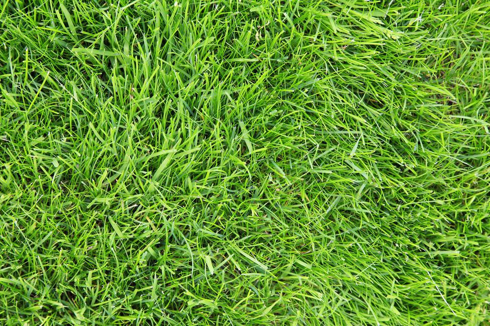 Fresh Green Grass Canvas Print Amp Canvas Art Photowall