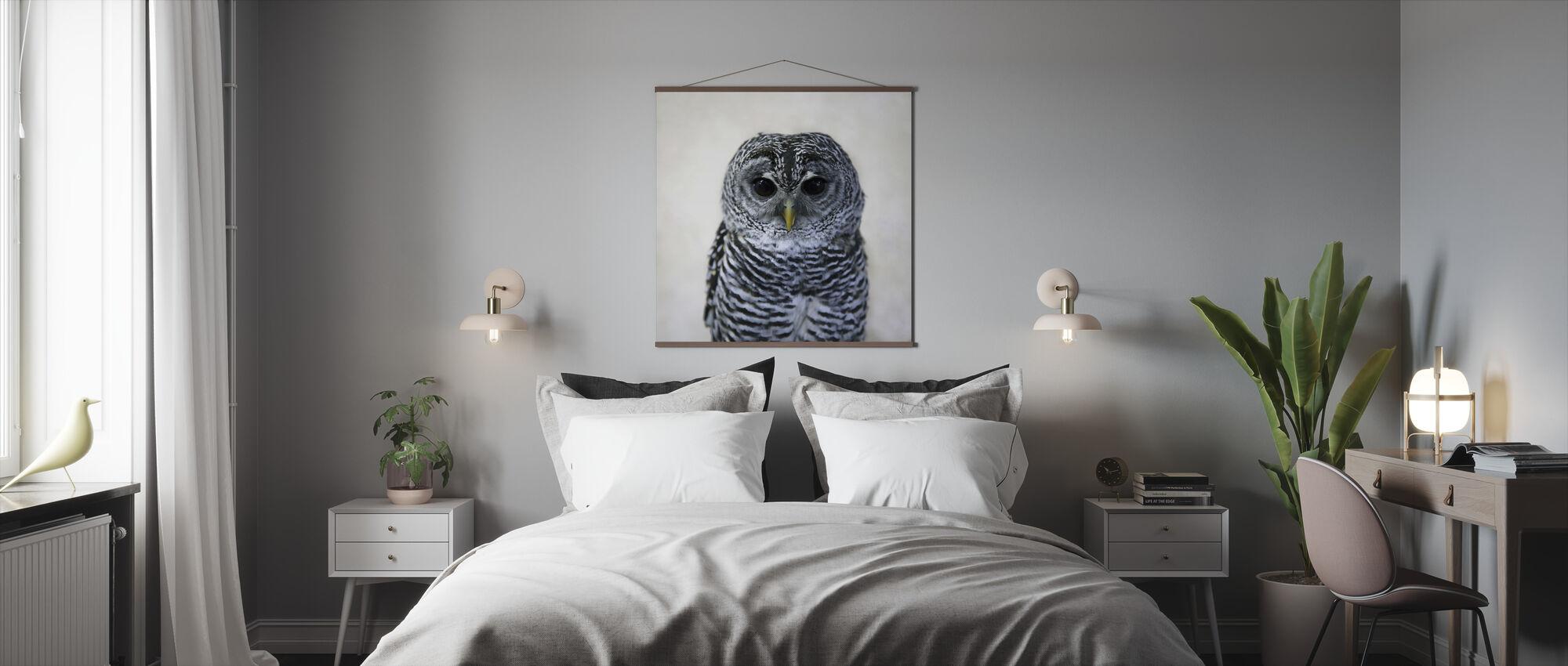 Rufous Legged Owl - Poster - Bedroom
