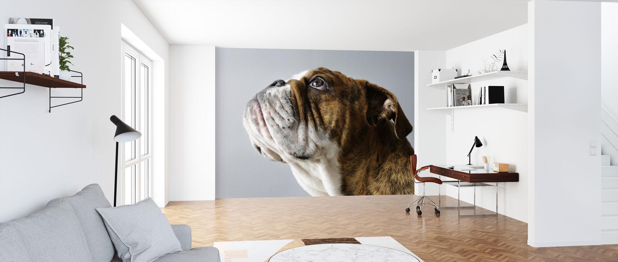 English Bulldog - Wallpaper - Office