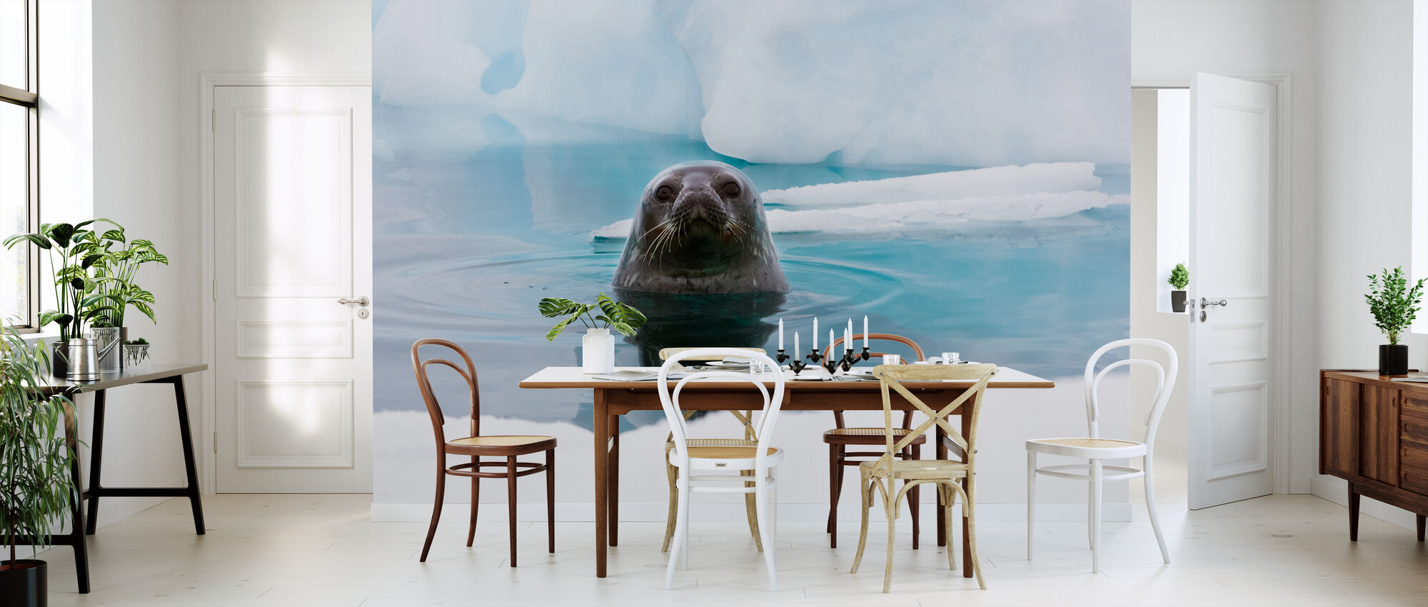 curious seal preiswerte fototapete photowall. Black Bedroom Furniture Sets. Home Design Ideas