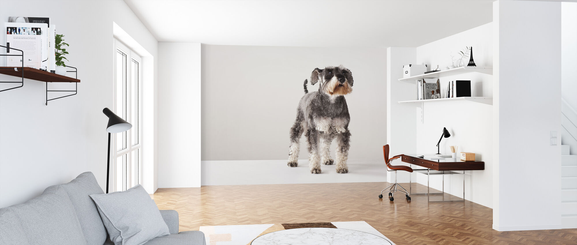 Schnauzer - Wallpaper - Office