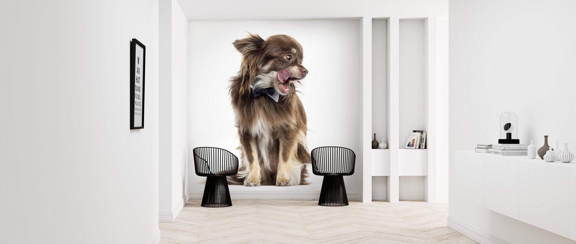 Chihuahua - Wallpaper - Hallway