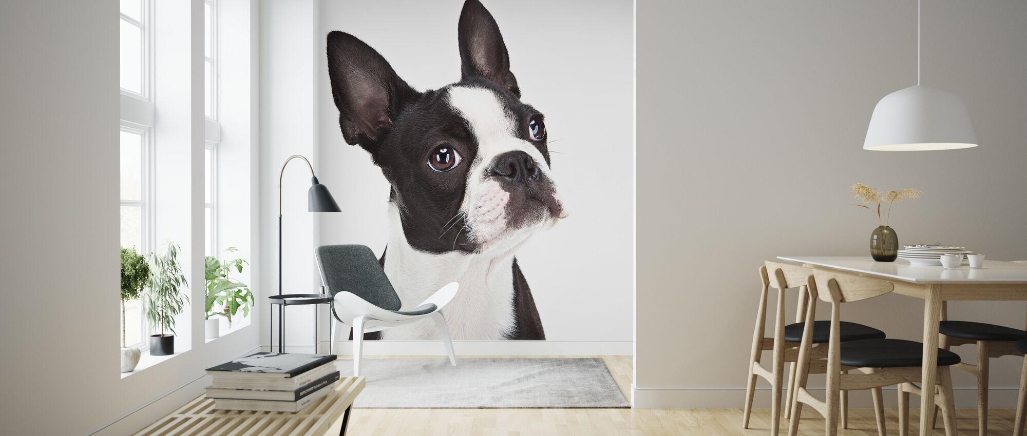 Boston Terrier - Wallpaper - Living Room