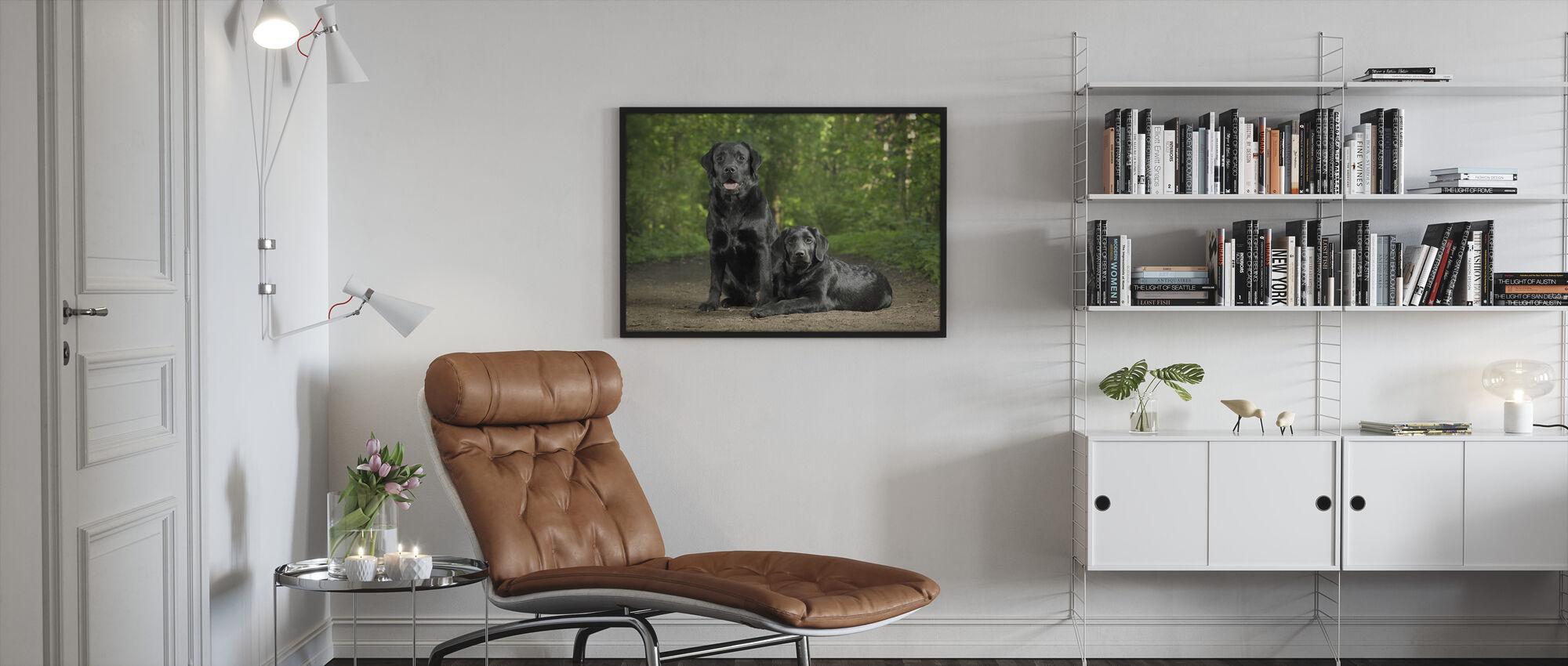 To sorte labradorer - Innrammet bilde - Stue