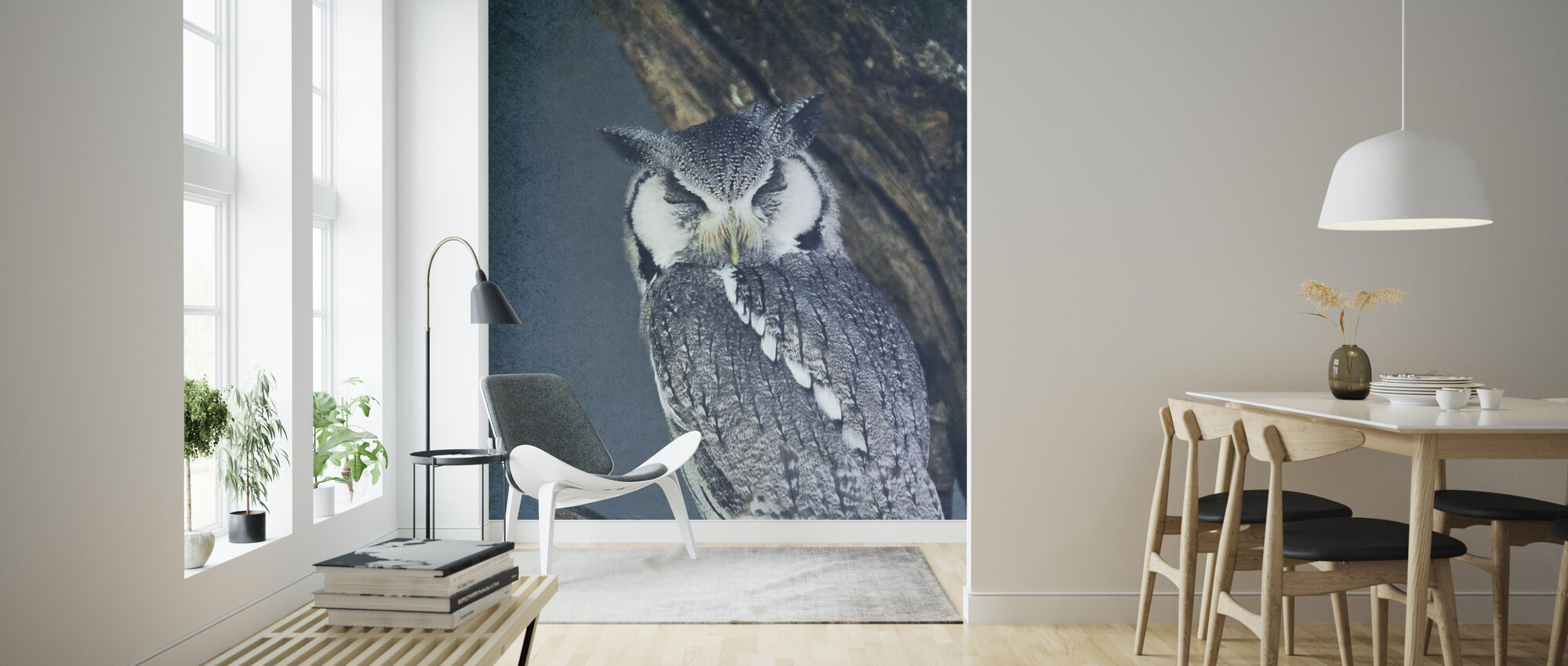 Sleeping Owl - Wallpaper - Living Room