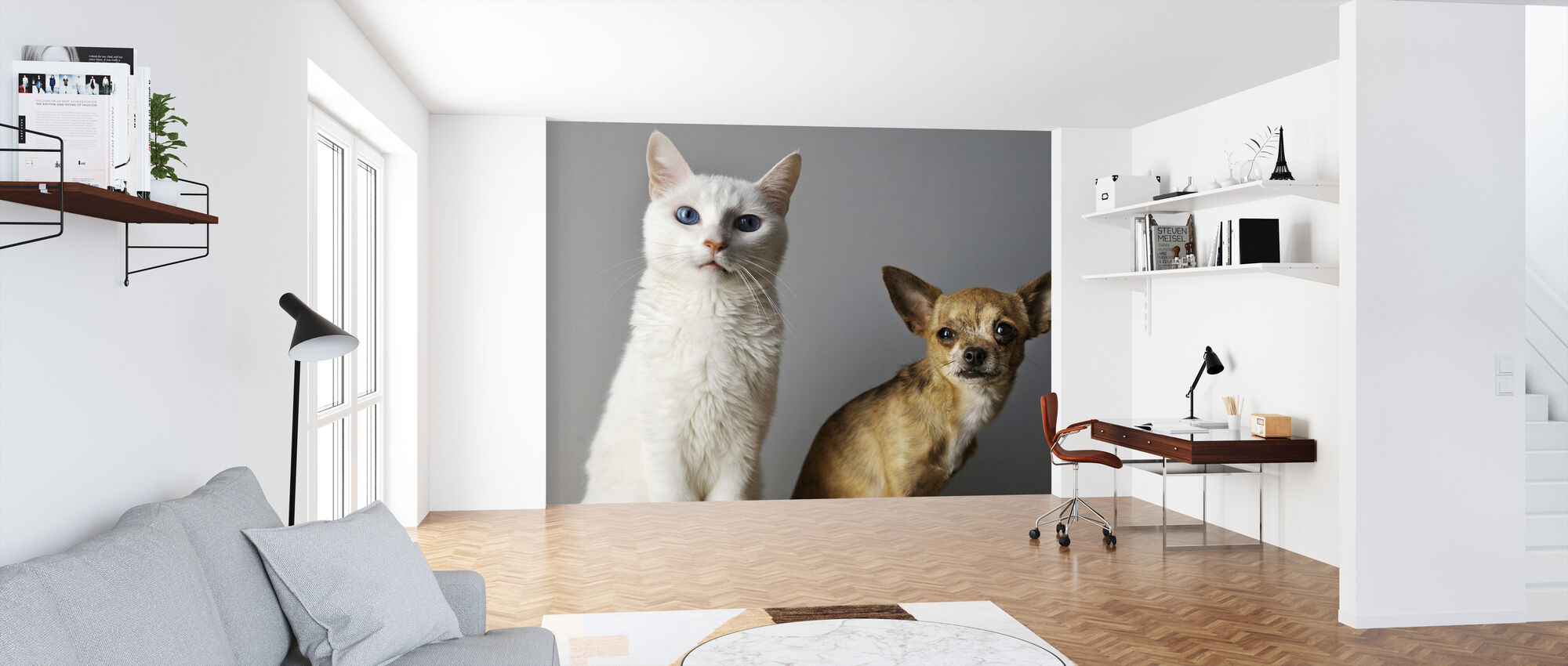 Duo of Cat and Dog - Wallpaper - Office