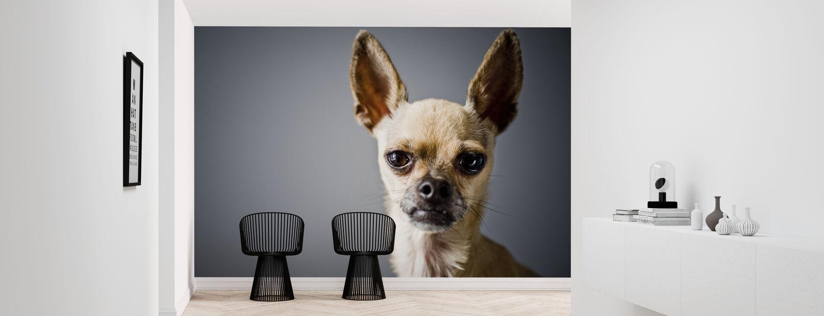 Chihuahua Nachahmung Lama - Tapete - Flur