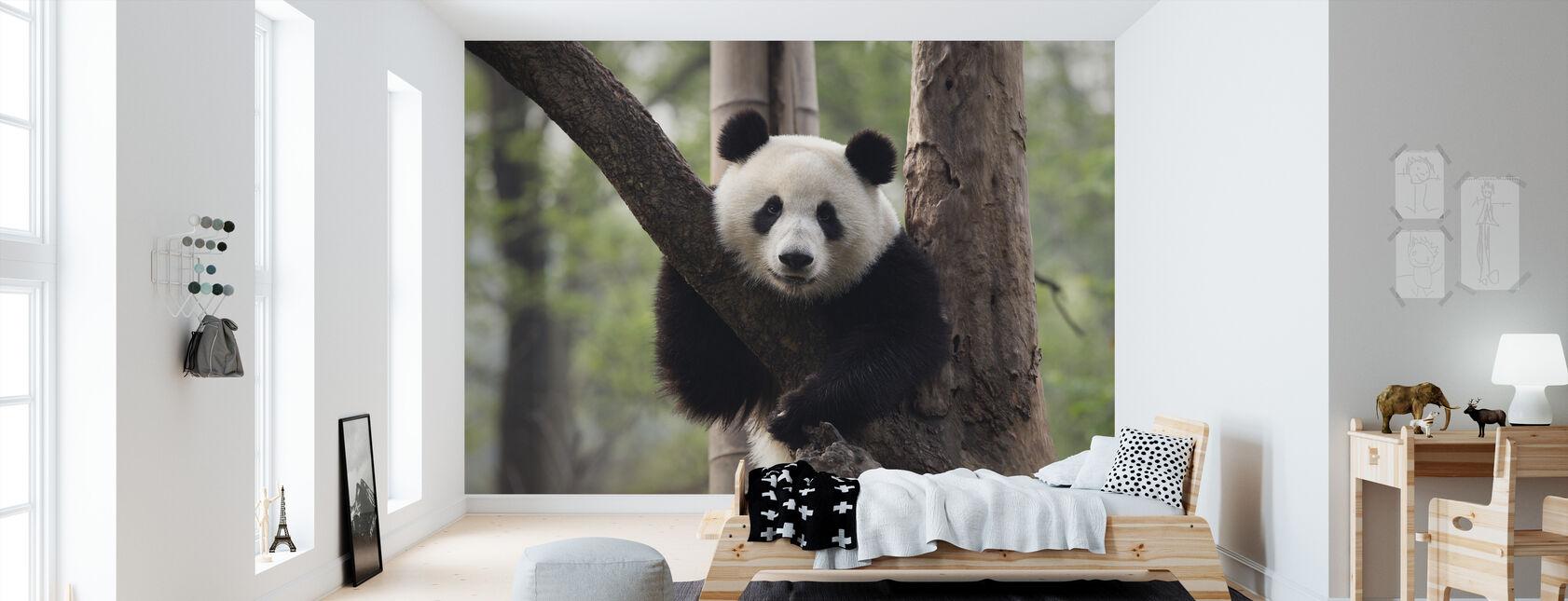 Sweet Panda - Wallpaper - Kids Room