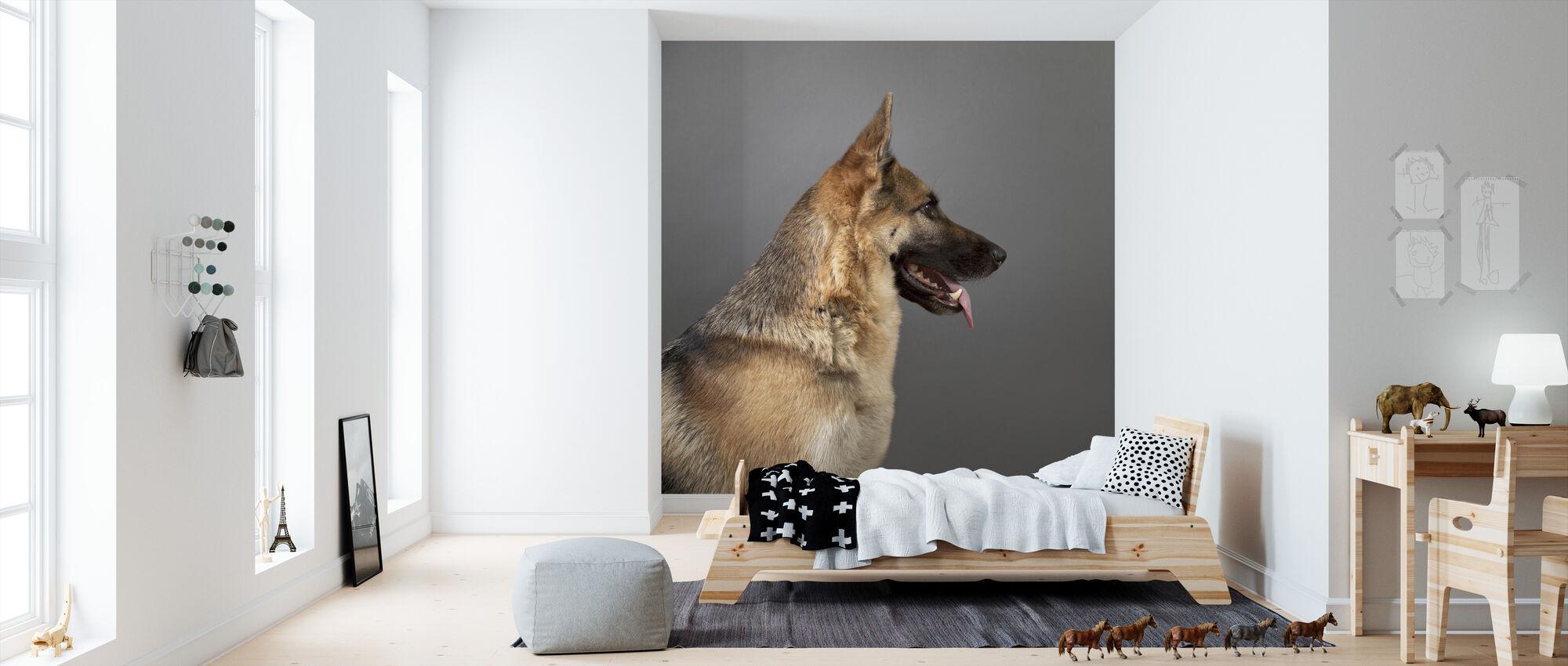 german shepherd fototapete nach ma photowall. Black Bedroom Furniture Sets. Home Design Ideas