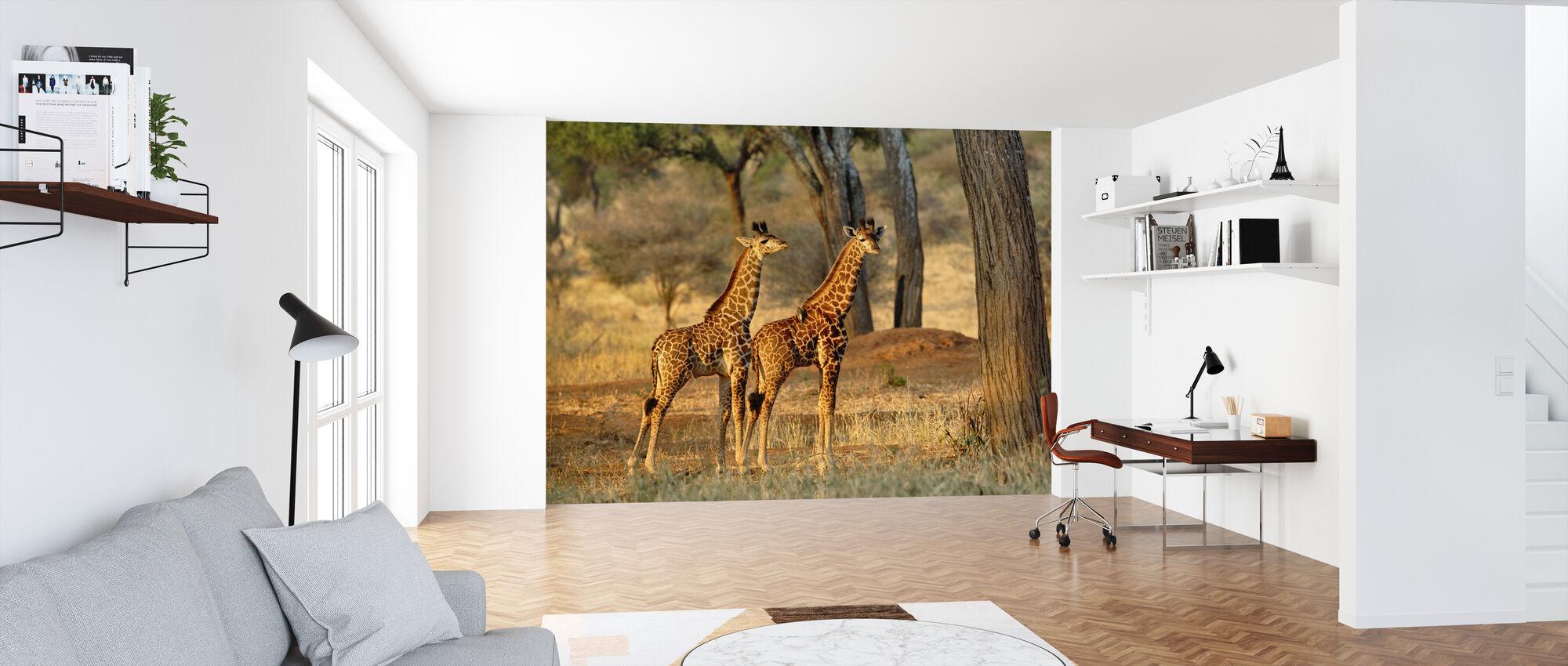 Young Giraffes at Sunset - Wallpaper - Office