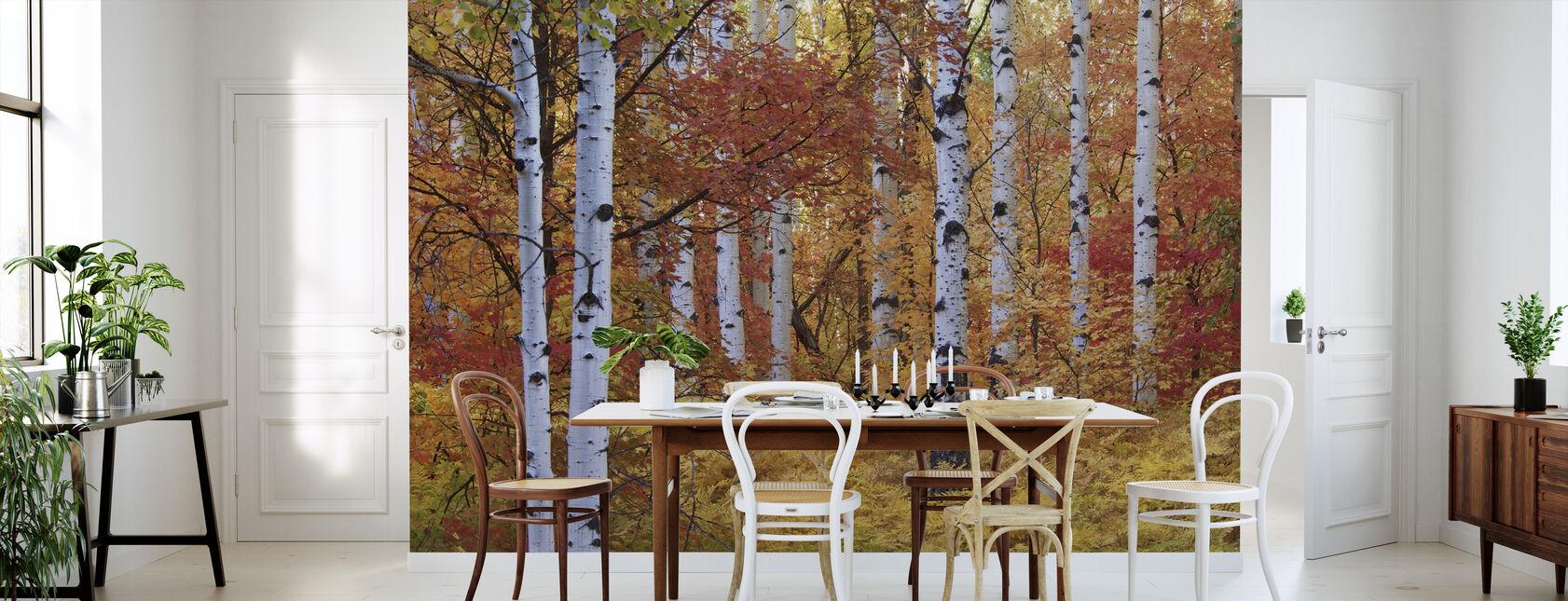 Herbst Birken der Rocky Mountains - Tapete - Küchen
