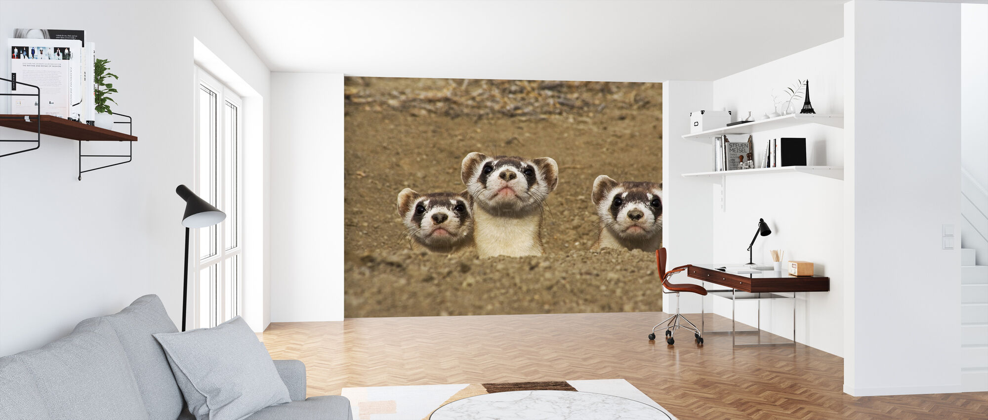 Three Black-footed Ferrets - Wallpaper - Office