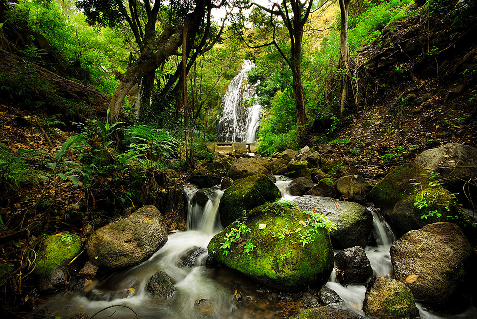 Peaceful Forest Waterfall