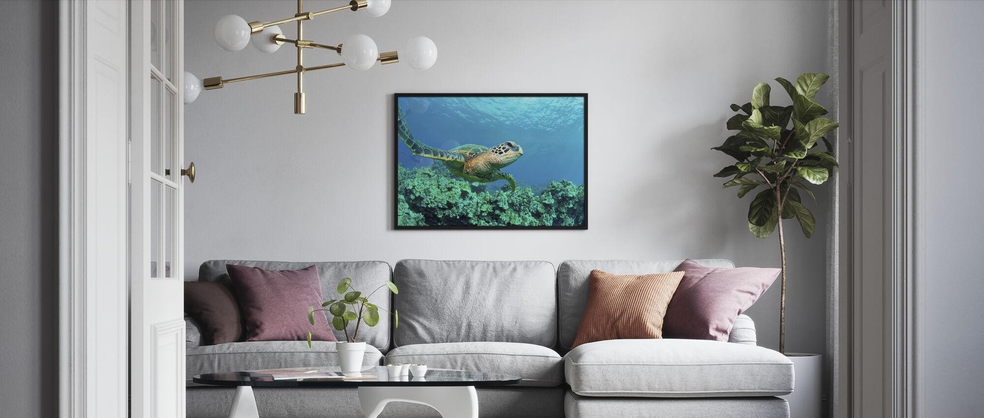 Havskilpadde i Korall - Innrammet bilde - Stue