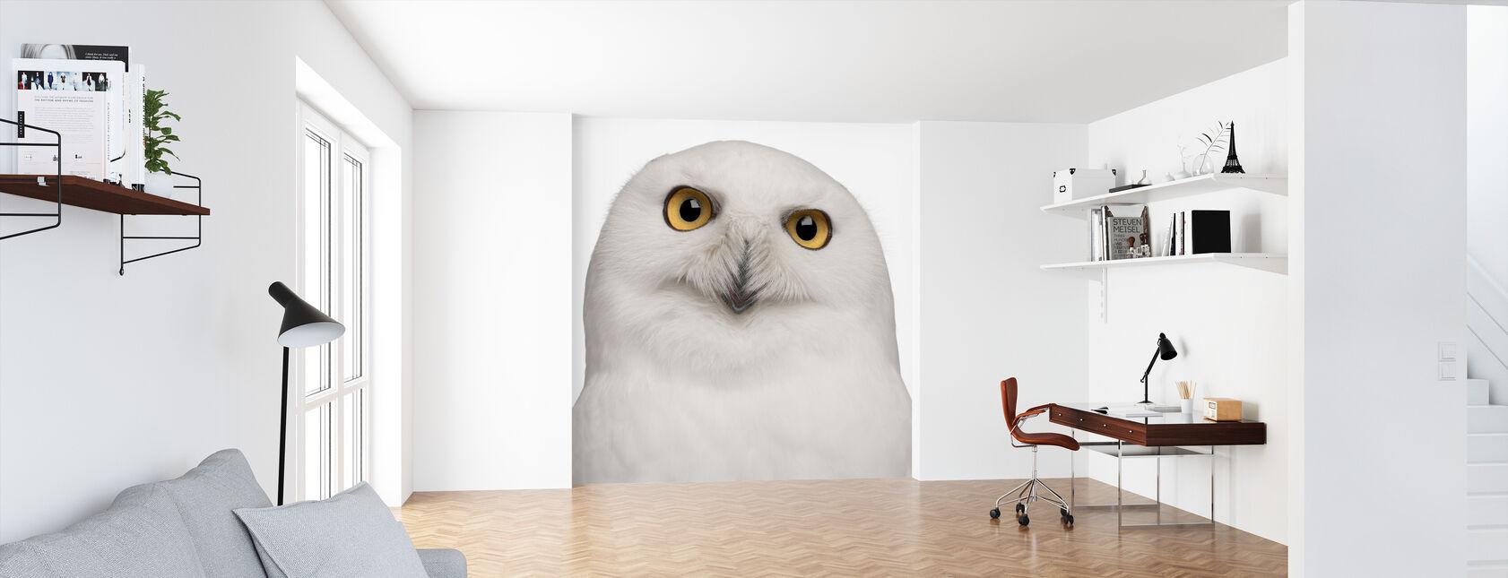 Snowy Owl - Wallpaper - Office