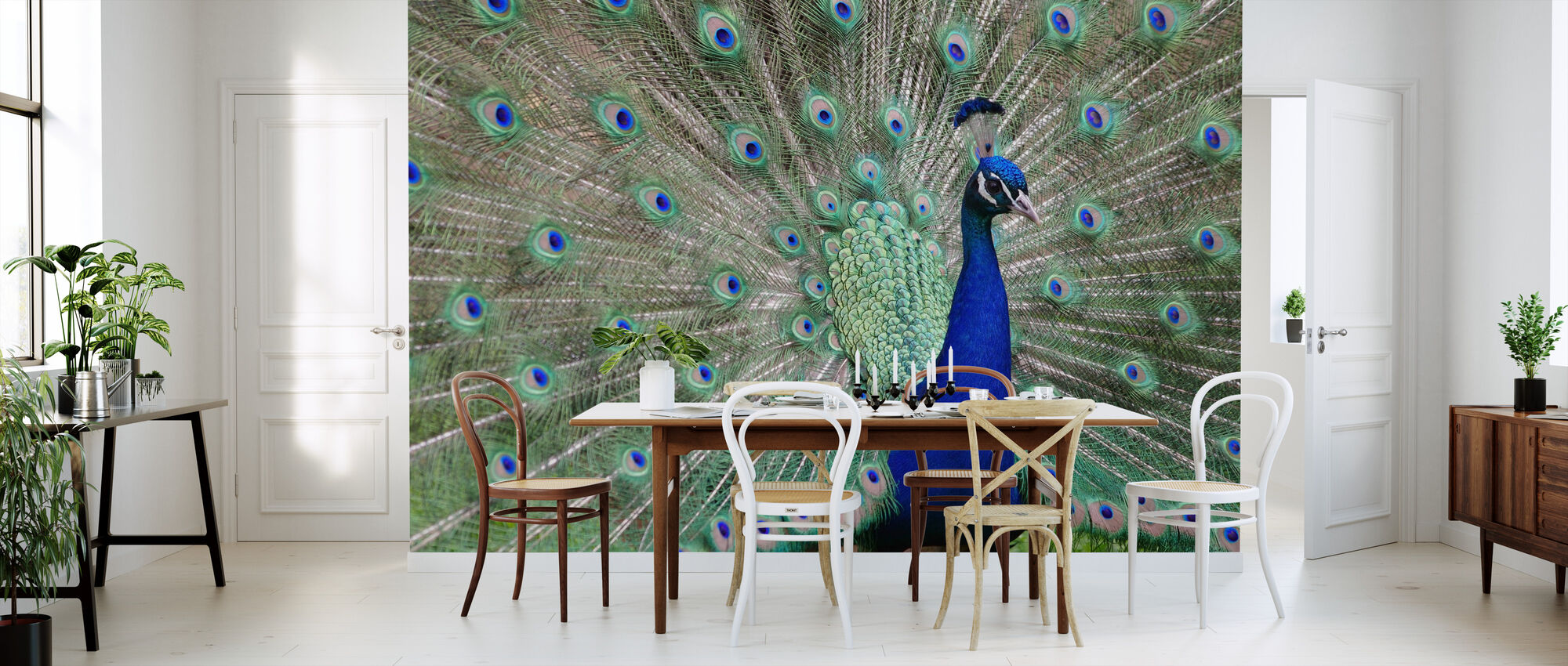Peacock Showing off - Wallpaper - Kitchen