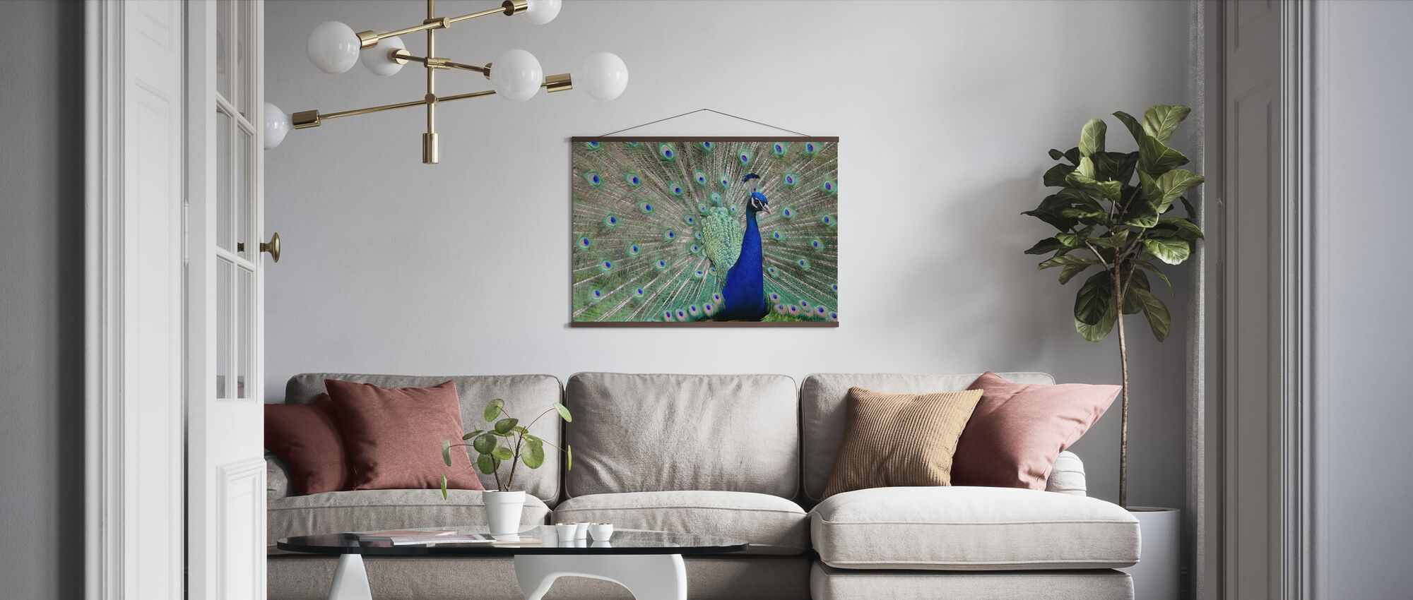 Peacock Showing off - Poster - Living Room