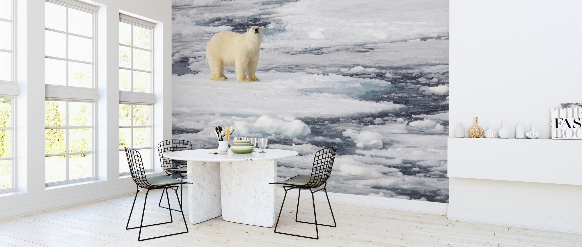 Polar Bear on Sea Ice - Wallpaper - Kitchen