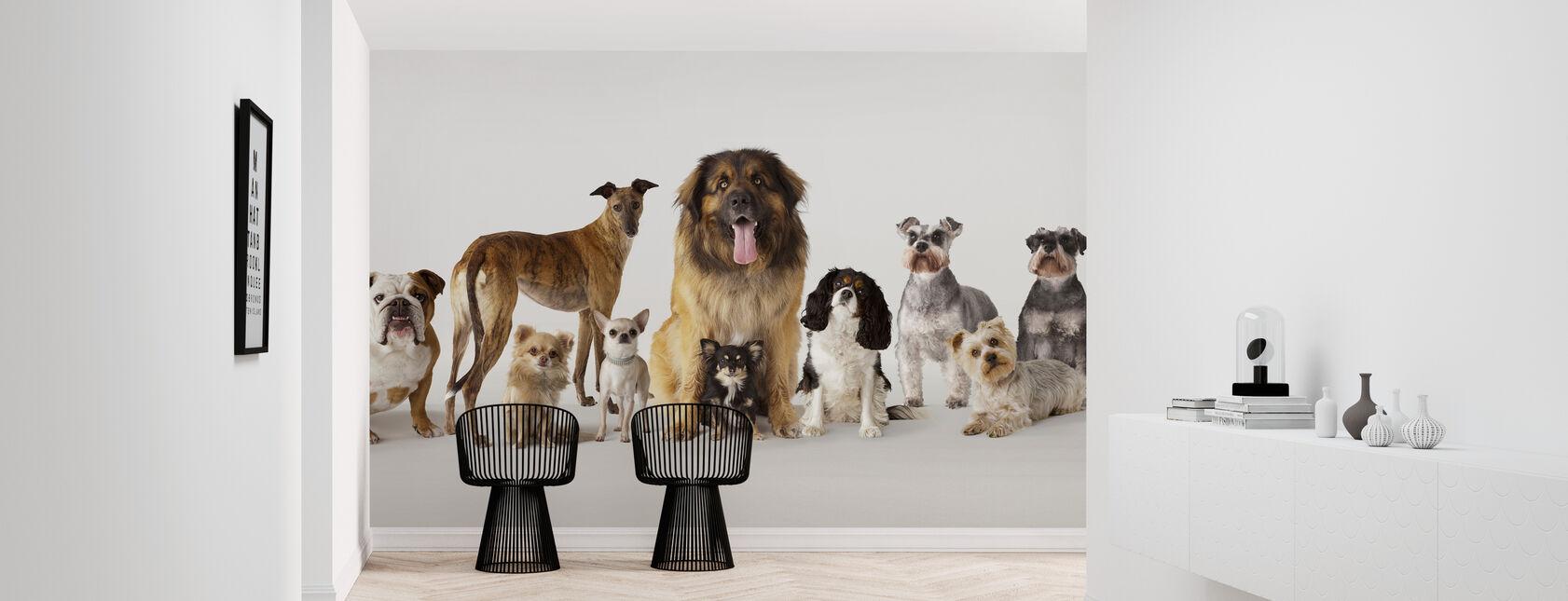 Ryhmämuotokuva Koirat - Tapetti - Aula