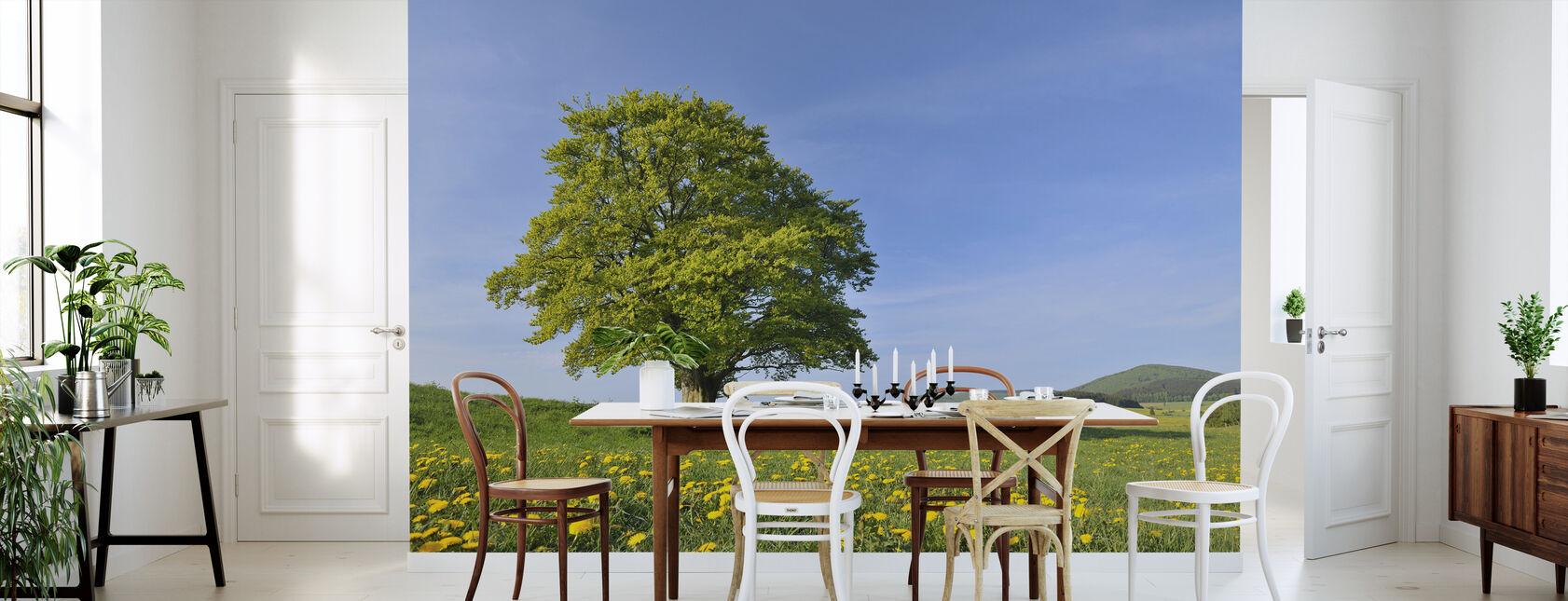 Lone Beech Tree - Wallpaper - Kitchen
