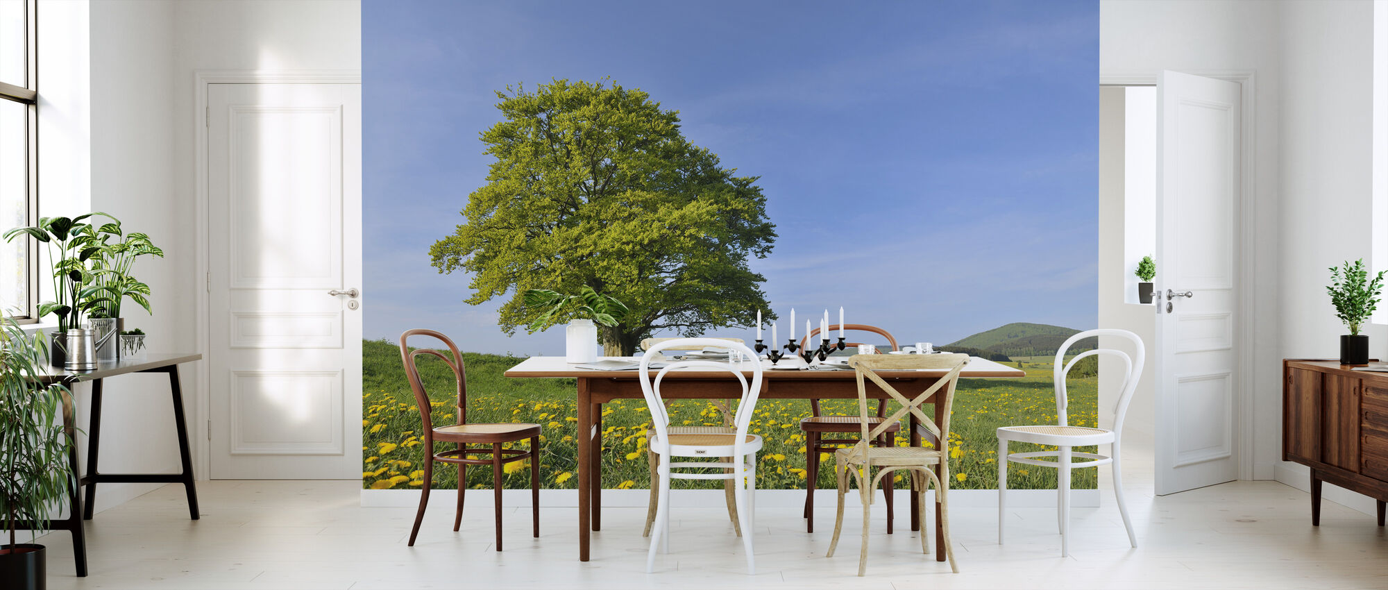 Lone Beech Tree - Wallpaper - Kitchen