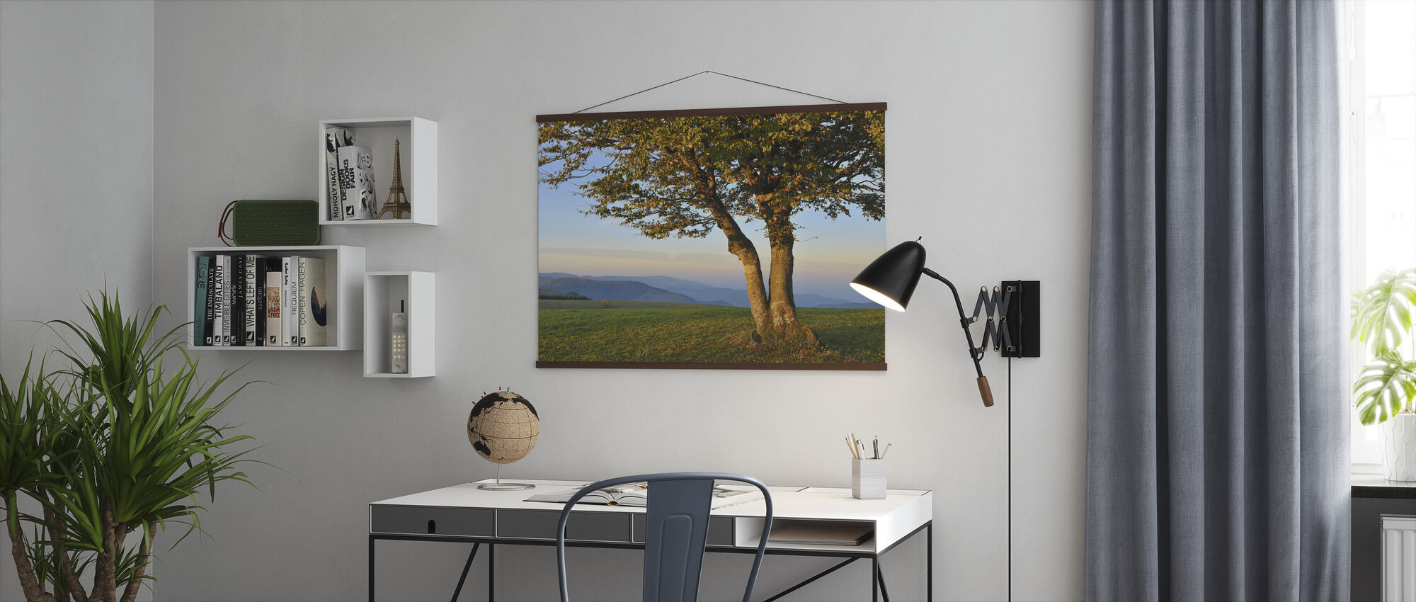 Beech Tree in Black Forest - Poster - Office