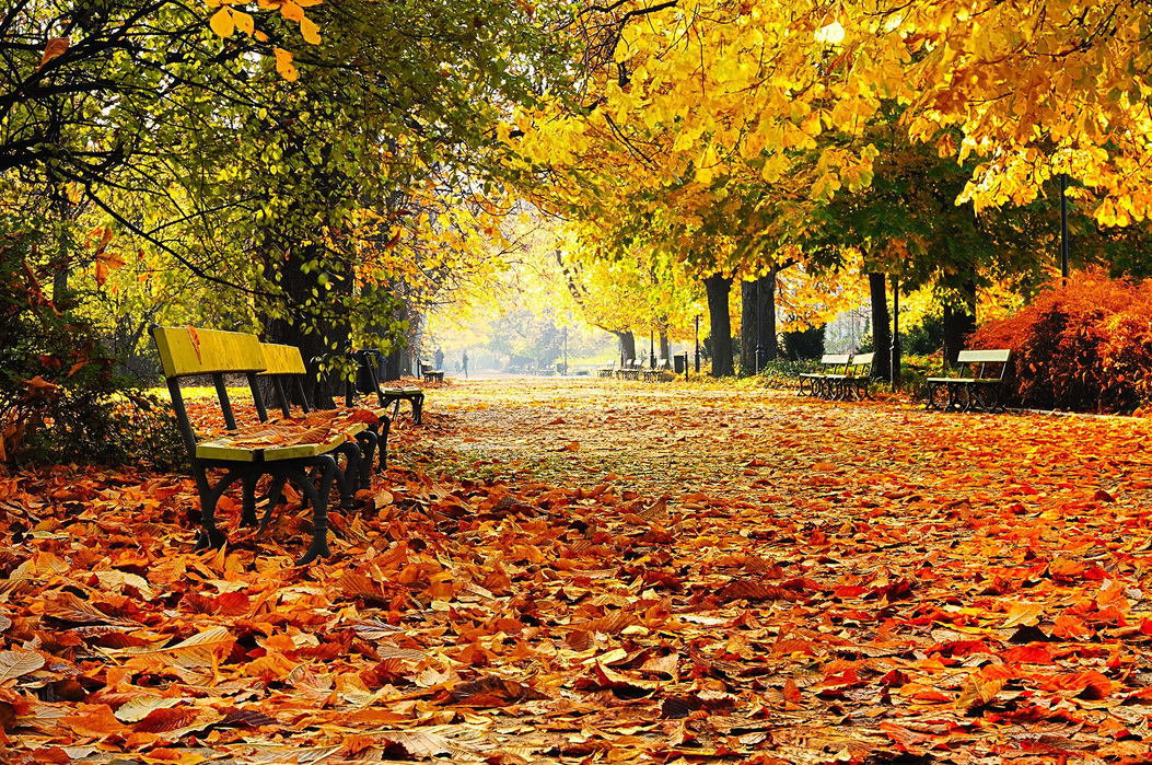Details about  /Autumn Scene Park Forest Canvas Wall Art Framed Room Print Picture S244