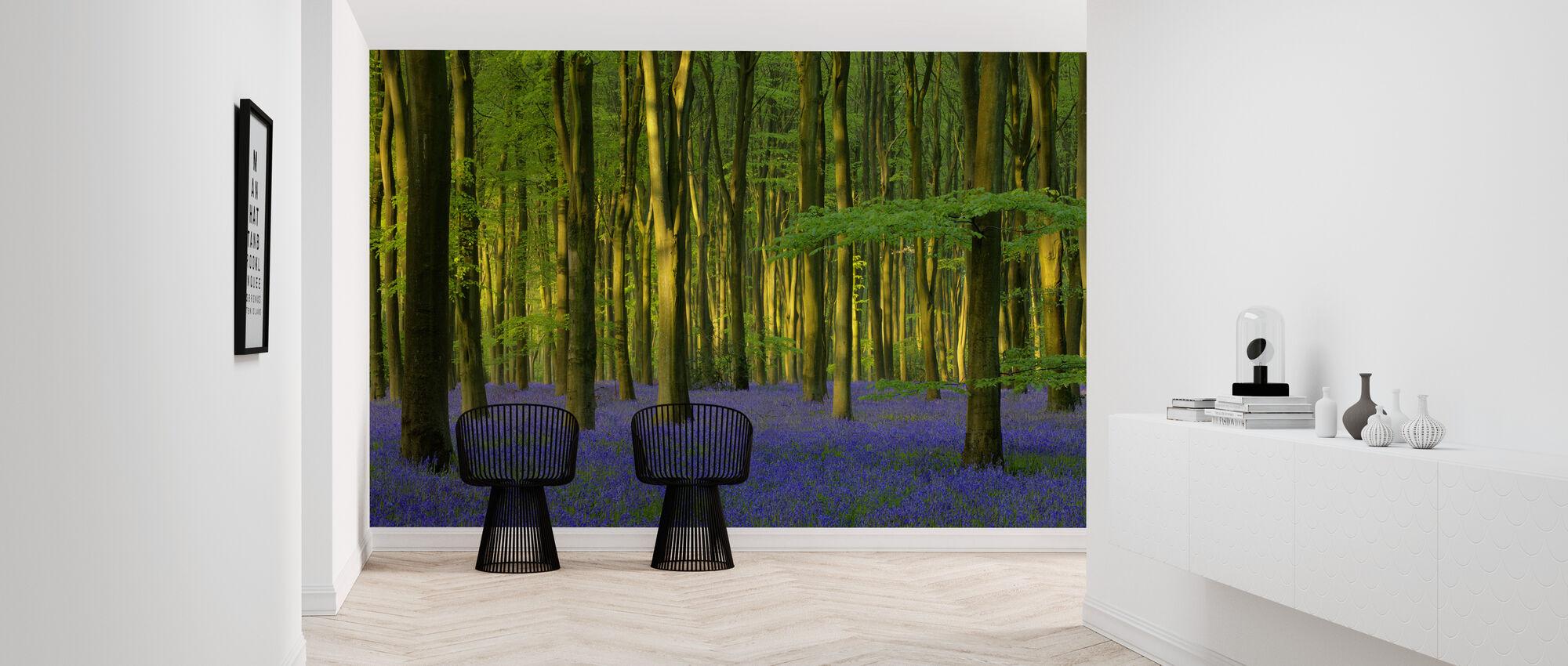 Bluebells i solljus - Tapet - Hall