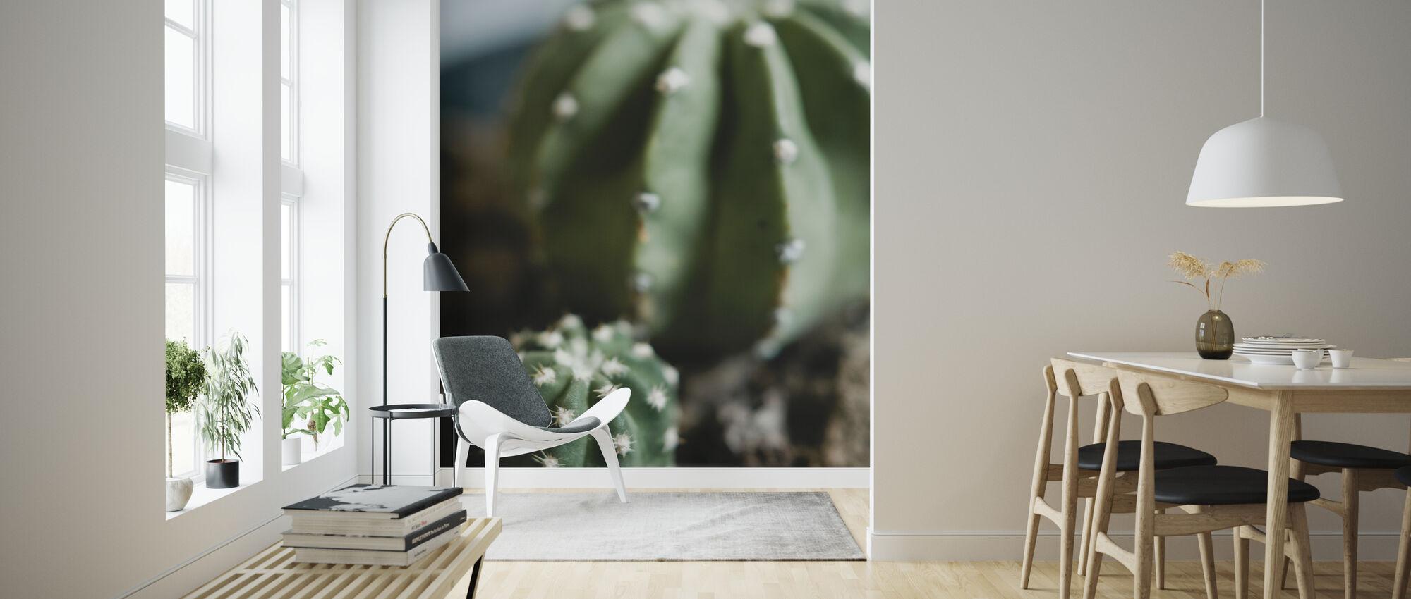 Echinopsis Cacti - Tapetti - Olohuone