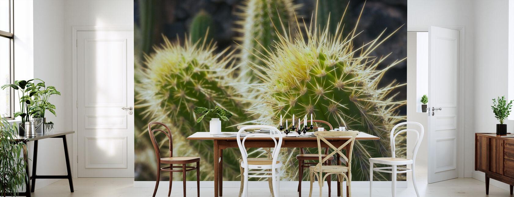 Golden Barrel Cactus - Wallpaper - Kitchen