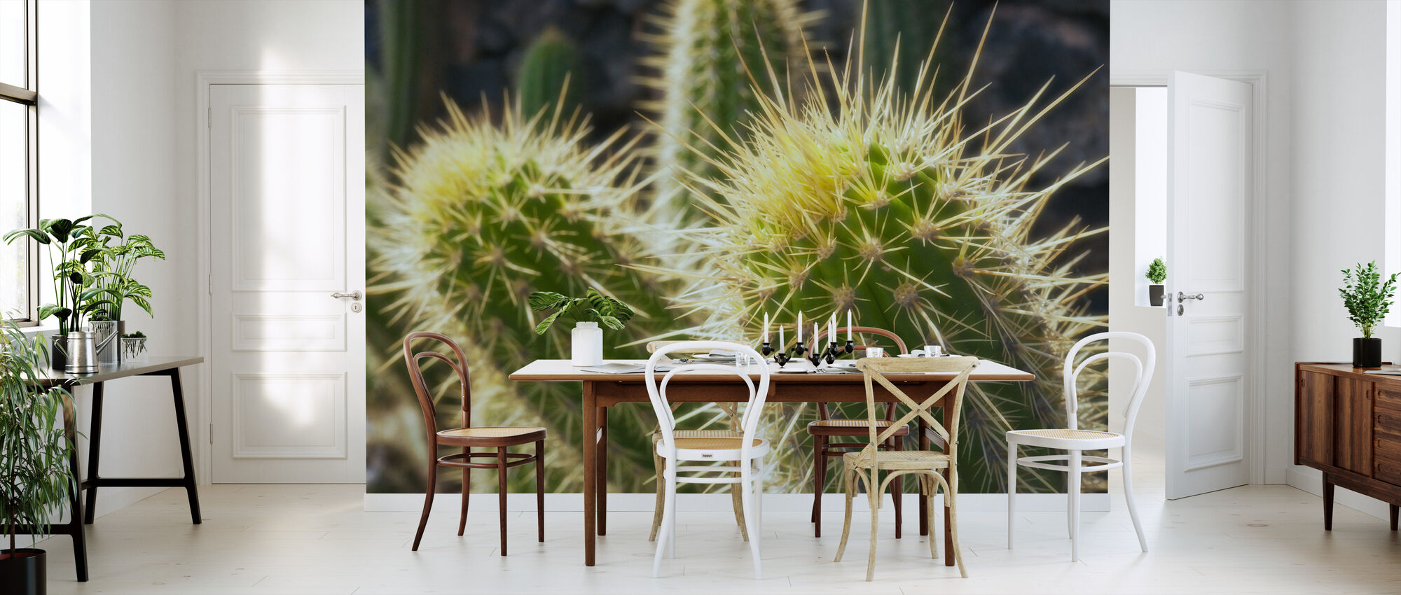 Golden Barrel Cactus - Wallpaper - Kitchen
