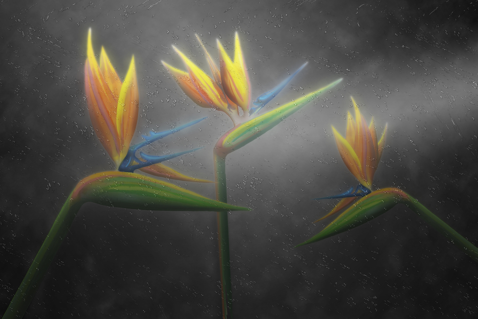 Kuva Bird of Paradise Tapetit / tapetti 100 x 100 cm