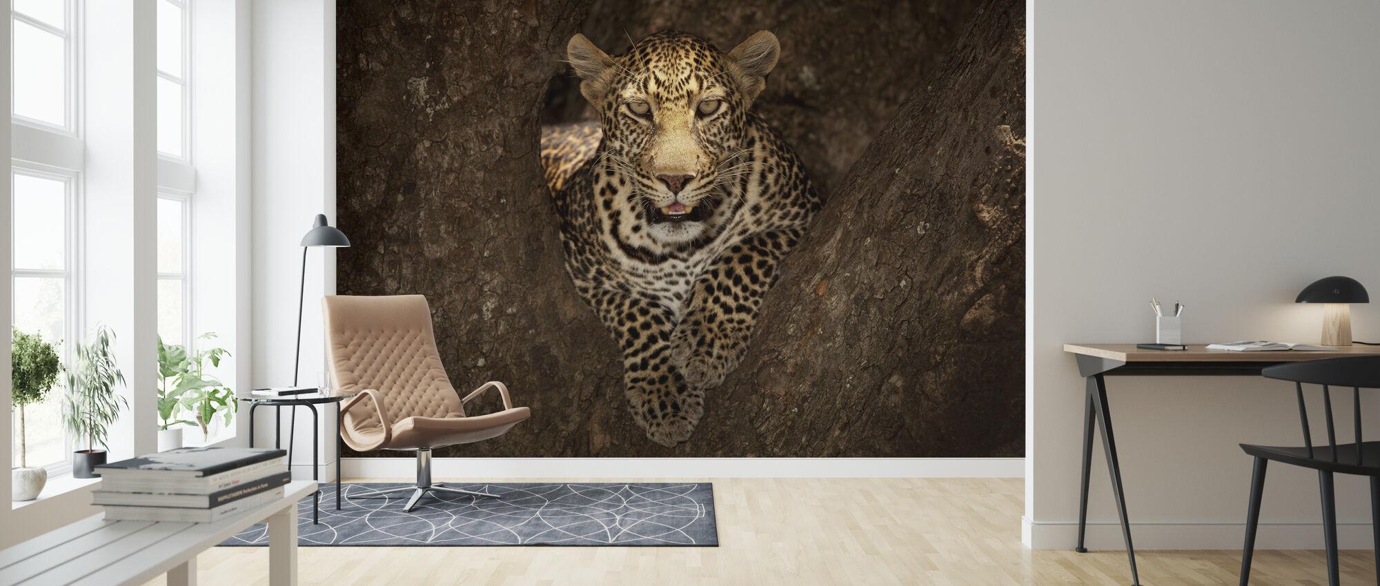 Leopardi lepää puu Masai Mara - Tapetti - Olohuone