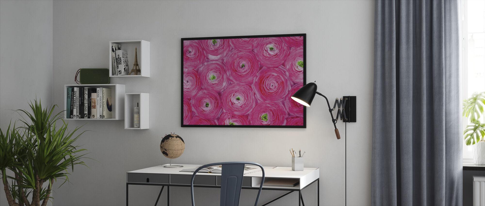 Pink Ranunculus - Framed print - Office
