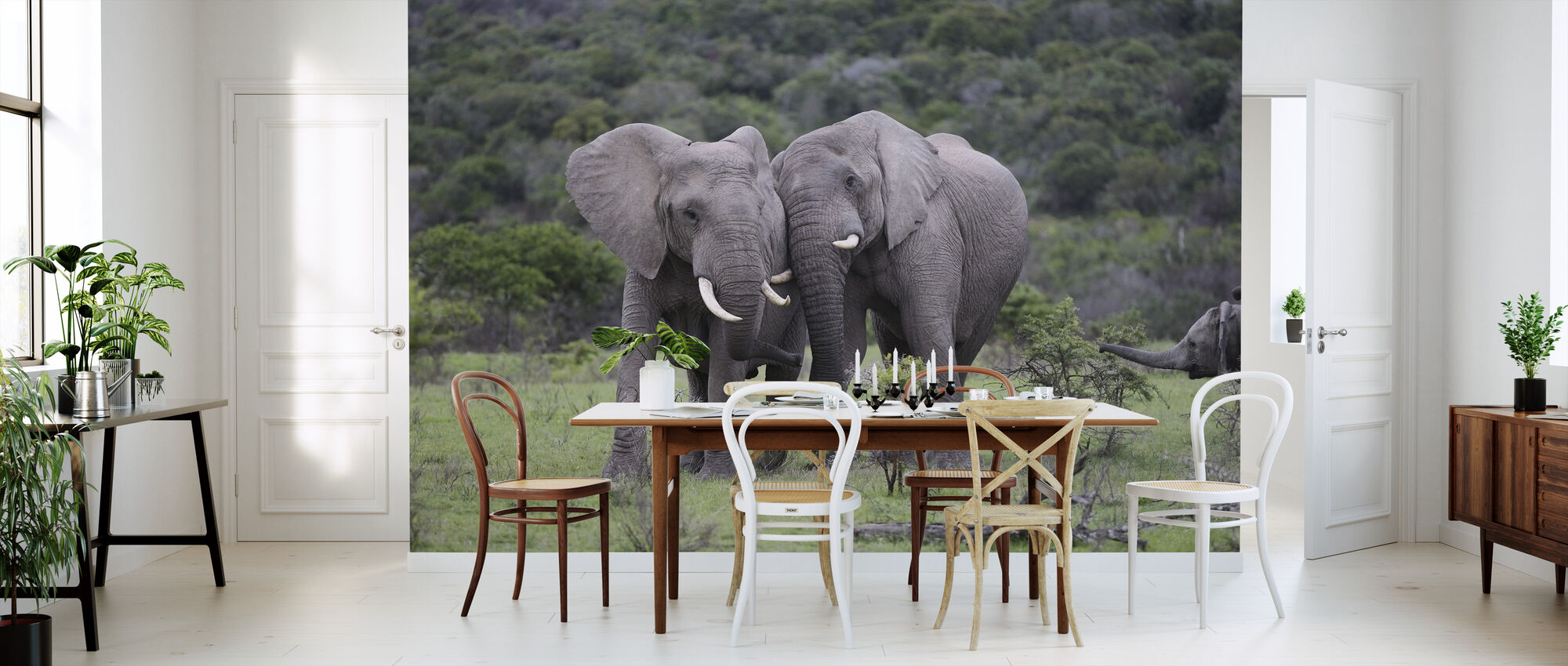 cuddling elephants trendige fototapete photowall. Black Bedroom Furniture Sets. Home Design Ideas