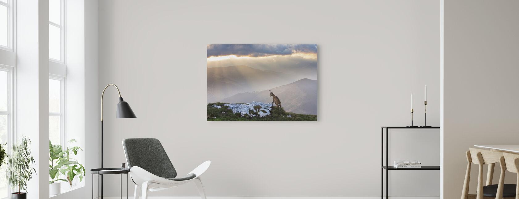 Chamois in Piatra Craiului Romania - Canvas print - Living Room