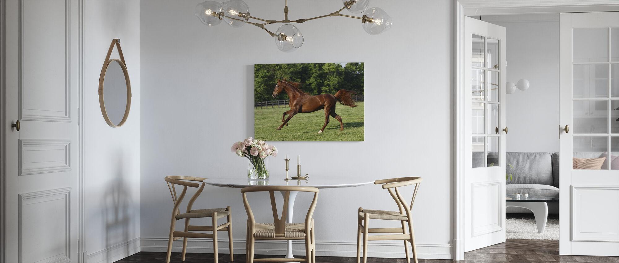 Saddlebred - Canvas print - Kitchen