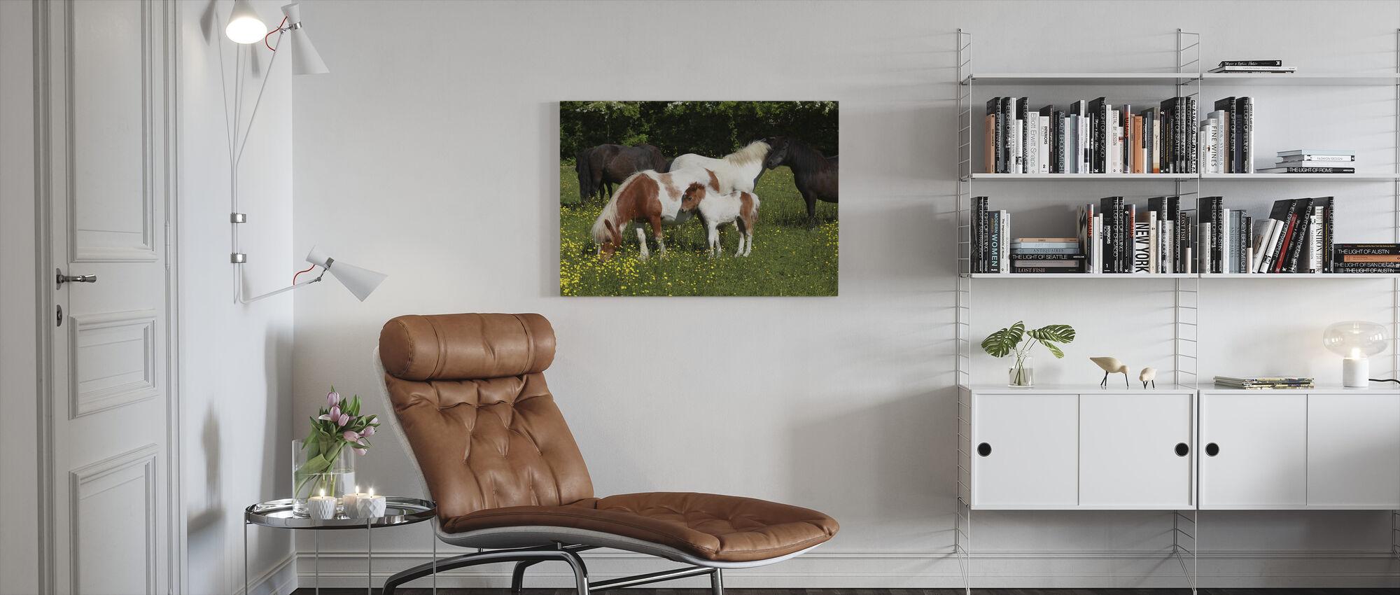 Shetlandponys - Leinwandbild - Wohnzimmer