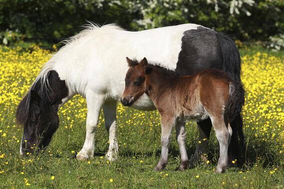 Verrassende Kinderkamer Paarden : Paarden u2013 uniek fotobehang u2013 photowall