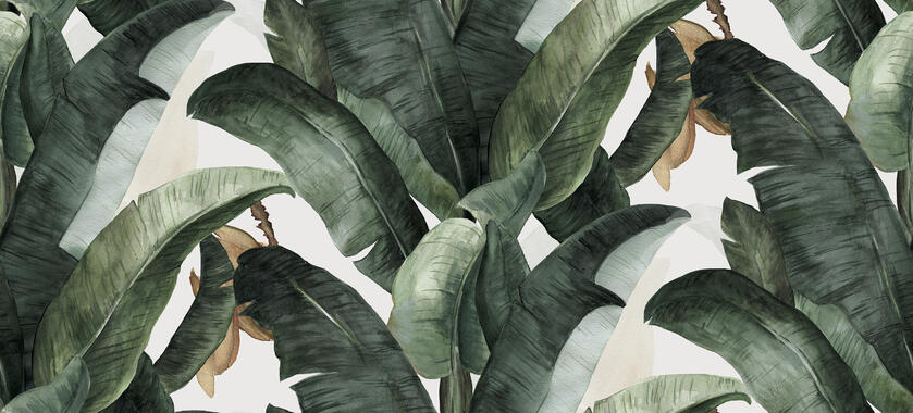 Botany Banana - Wallpaper