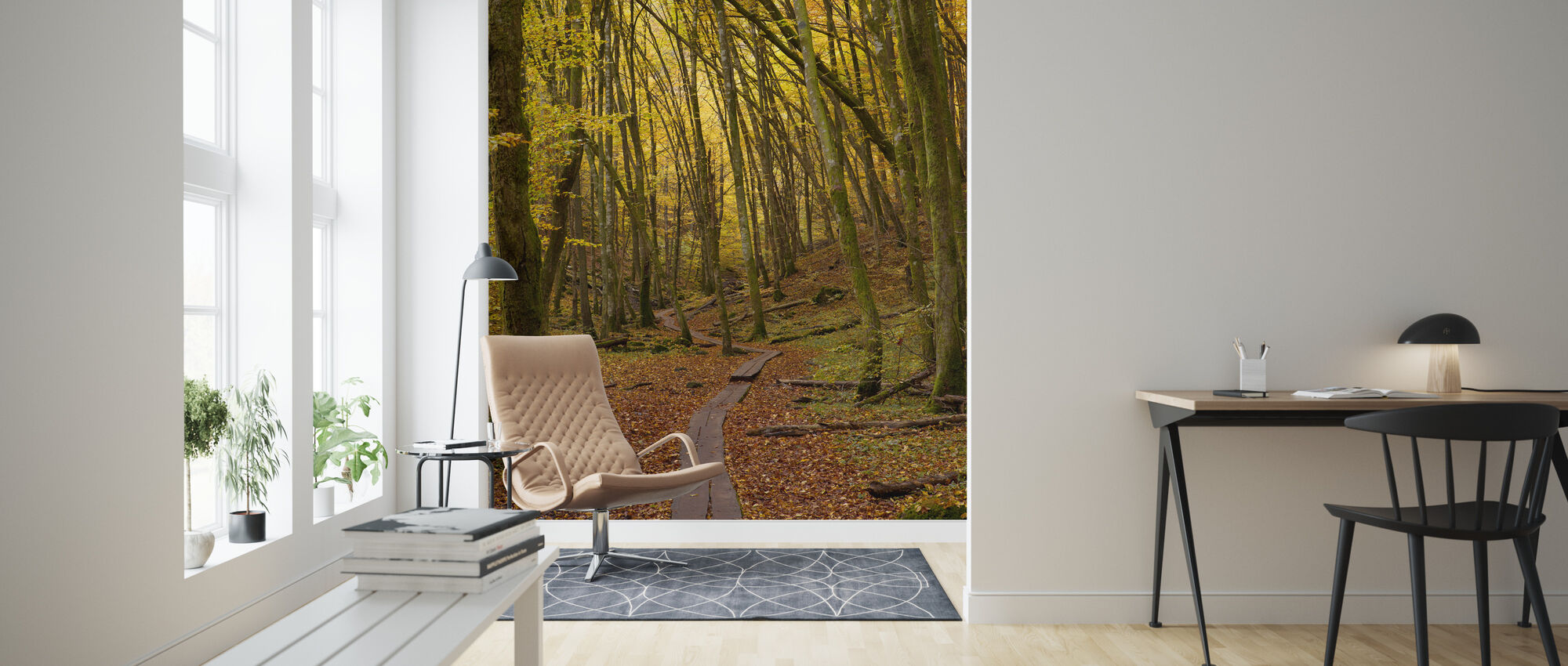 Path through Beech Wood - Wallpaper - Living Room