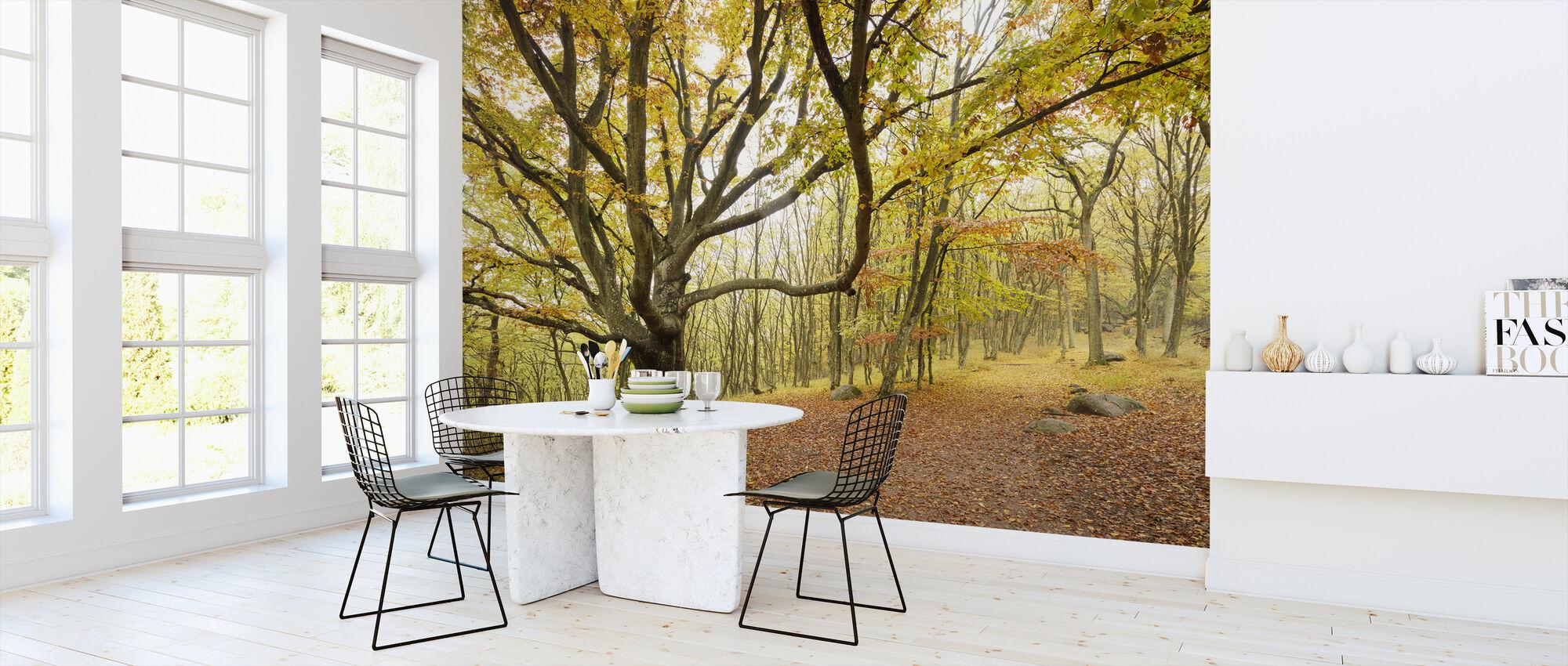 Autumn Trees in Stenshuvud, Sweden, Europe - Behang - Keuken