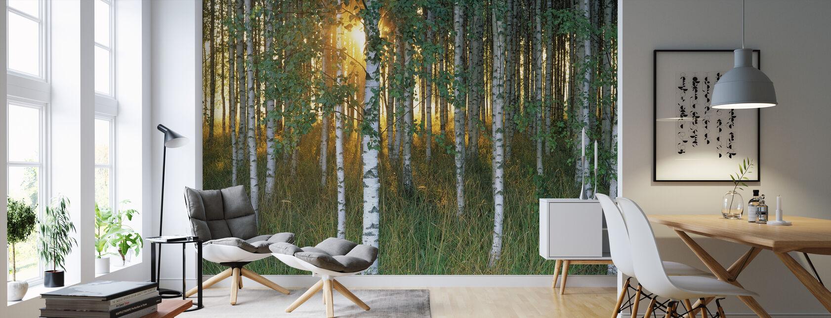 Sunbeam gjennom Birch Forest - Tapet - Stue