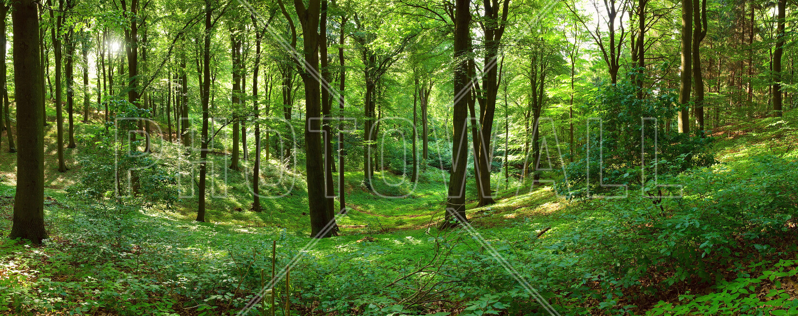 Panorama Forest Wall Mural Amp Photo Wallpaper Photowall