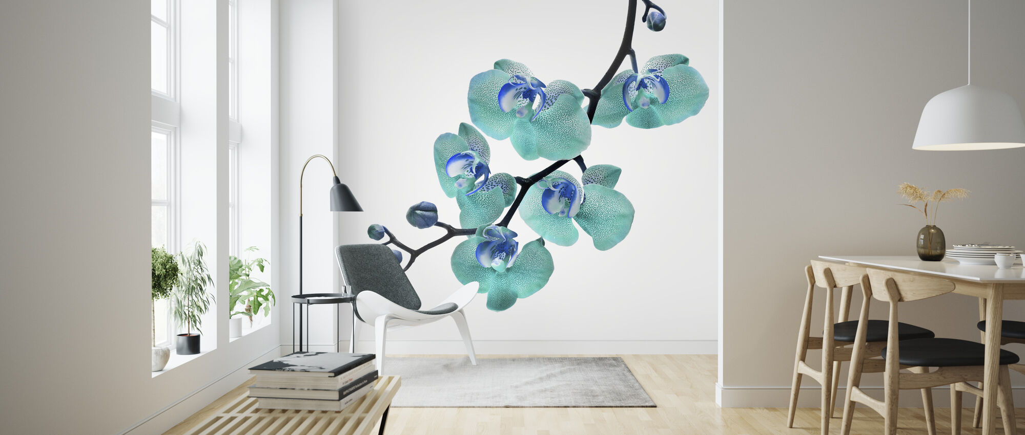 Blue Phalaenopsis Orchid - Wallpaper - Living Room