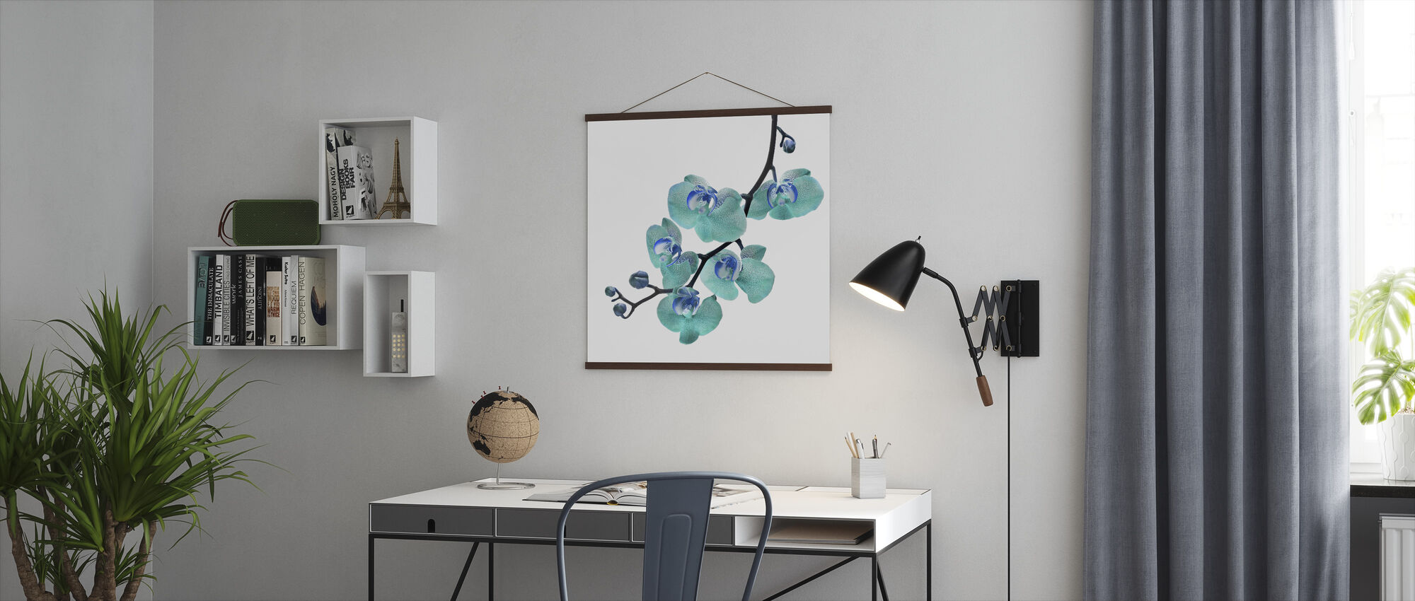 Blue Phalaenopsis Orchid - Poster - Office