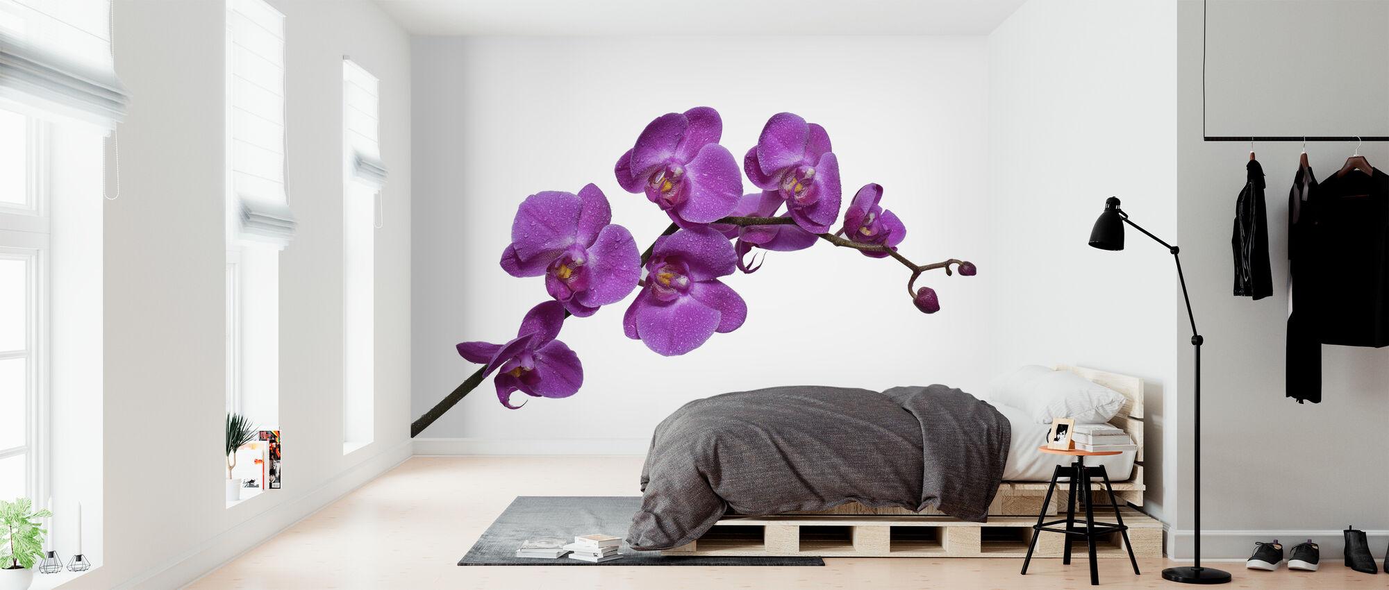 Crisp Orchids - Wallpaper - Bedroom