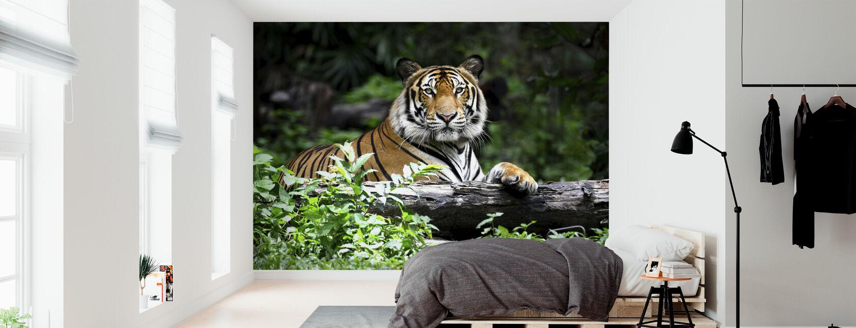 Bengal Tiger - Tapet - Soveværelse